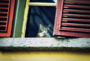 Kitty Cat Photo Prints - The world outside Print by Silvia Ganora