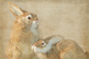 Hare Mixed Media Prints - The Year Of The Hare Print by Maria Dryfhout