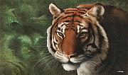 Tiger Painting Framed Prints - The Year of the Tiger 2010... Framed Print by Will Bullas