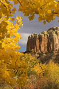Sangre De Cristo Prints - The Yellow Leaves Of Fall Frame A Rock Print by Ralph Lee Hopkins