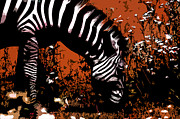 Jared Theberge - The Zebra