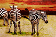 Red Sky Mixed Media Posters - The Zebras Poster by Angela Doelling AD DESIGN Photo and PhotoArt