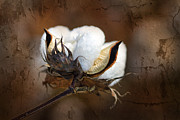Layered Digital Art Prints - Them Cotton Bolls Print by Kathy Clark