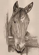 Stable Drawings - Theodore by JAMART Photography