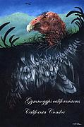 Birds Of Prey Paintings - Ther California Condor... by Will Bullas