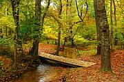 Autumn Woods Posters - There Is Peace - Allaire State Park Poster by Angie McKenzie
