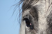 Quarter Horse Framed Prints - Theres a Universe in That Eye Framed Print by Carolina Liechtenstein