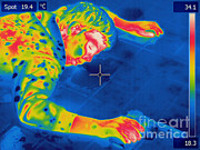 Hot Gun Framed Prints - Thermogram Crime Scene Framed Print by Ted Kinsman