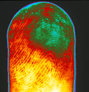 Thermogram Prints - Thermogram Of A Human Finger Print by Dr. Arthur Tucker