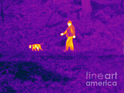 Walking The Dog Posters - Thermogram Of A Man And Dog Poster by Ted Kinsman