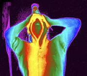 Shower Head Prints - Thermogram Of A Man Taking A Shower Print by Dr. Arthur Tucker