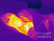 Thermogram Prints - Thermogram Of A Sleeping Girl Print by Ted Kinsman