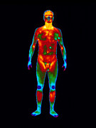 Naked Body Prints - Thermogram Of A Standing Naked Man (front View) Print by Dr. Arthur Tucker Photo Library