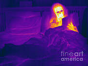 Human Being Posters - Thermogram Of A Woman In Bed Poster by Ted Kinsman
