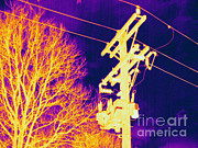 Electric Current Posters - Thermogram Of Electrical Wires Poster by Ted Kinsman
