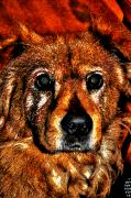 Dogs Digital Art - These Eyes by William Jones
