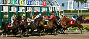 Horserace Prints - They Are Off  Print by Allan Einhorn