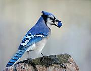 Bird Photos - Thief of Sweets by Jan Piller