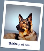 Shepherd Island Posters - Thinking of You  Poster by Ania M Milo