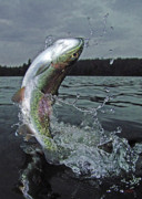Trout Greeting Card Photo Posters - Thinking Of You Poster by Brian Pelkey