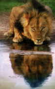 African Lion Prints - Thirst For Life Print by Carol Cavalaris