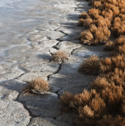 Dry Lake Photos - Thirsty Lake by Peter Olsen