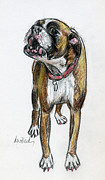 Boxer Dog Drawings Prints - This Boxer Can Sing Print by Deborah Willard
