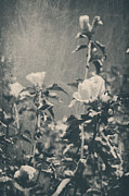 Textured Floral Digital Art Prints - This Glorious Sadness Print by Laurie Search
