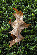 Leaves - This is a Dance to Fall by Robert Ullmann