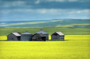 Yellow Barn Acrylic Prints - This is Alberta No.15 - Prairie Barns Acrylic Print by Paul W Sharpe Aka Wizard of Wonders
