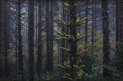 This Is British Columbia No.54 - Misty Mystical Moss Forest II Print by Paul W Sharpe Aka Wizard of Wonders