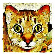 This Is My Surprised Face Kitty Print by Terry Mulligan