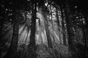 Forest Floor Originals - This is our World - No.1 - Forest Floor Morning Mist BW by Paul W Sharpe Aka Wizard of Wonders