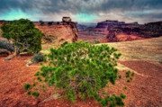 Canyonland Prints - This is Utah No. 8 - Canyonland Roots Print by Paul W Sharpe Aka Wizard of Wonders