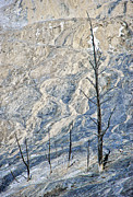 Spooky Originals - This is Wyoming No.  2 - Dead Trees at Mammoth Hot Springs by Paul W Sharpe Aka Wizard of Wonders