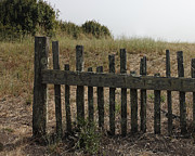 Old Fence Posts Metal Prints - This Old Fence Metal Print by Lydia Warner Miller
