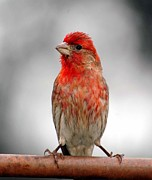 Red Finch Originals - This Side by Arnie Goldstein