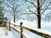 Winter Photos Painting Framed Prints - This Winter Framed Print by Subesh Gupta
