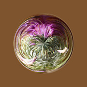 Sphere Framed Prints - Thistle Globe Framed Print by Robert Gipson