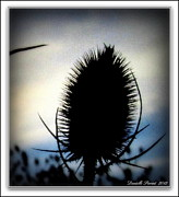 Blue Thistles Framed Prints - Thistle In The Sky Framed Print by Danielle  Parent
