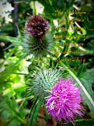 Bull Thistle Posters - Thistle Matthew 7 Poster by Cindy Wright