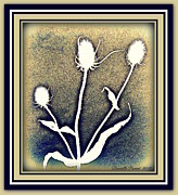 Blue Thistles Framed Prints - Thistles Grouping Framed Print by Danielle  Parent
