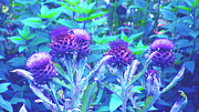 Blue Thistles Prints - Thistles Print by Louise Grant