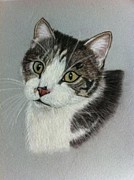 British Shorthair Art - Thomas A Pastel Portrait by Hillary Rose