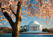 Humans Posters - Thomas Jefferson Memorial Poster by Inge Johnsson