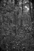Walden Pond Photo Posters - Thoreau Woods Black and White Poster by Lawrence Christopher