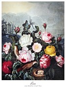 1805 Posters - Thornton: Roses Poster by Granger