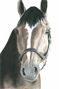 Thoroughbred Pastels Framed Prints - Thoroughbred Appendix Tripp Framed Print by Jessica Raines