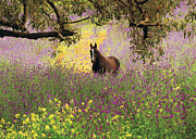 Grazing Horse Photo Posters - Thoroughbred Horse Among Wildflowers In The Chittering Valley, Western Australia Poster by Peter Walton Photography
