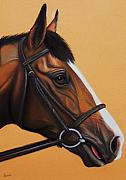 Thoroughbred Pastels Framed Prints - Thoroughbred horse Framed Print by Lucy Deane
